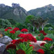 Gardens of South Africa